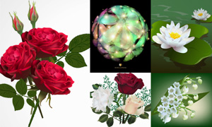 红玫瑰与荷花等花卉植物等矢量素材