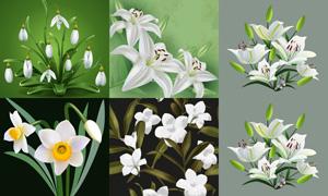 百合花与水仙花等花卉植物矢量素材