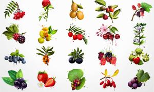 多款墨迹元素装饰水果PSD分层素材