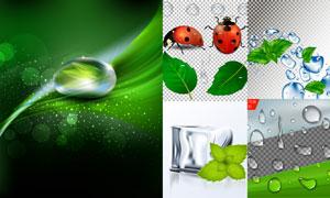 绿叶瓢虫与水珠冰块等设计矢量素材