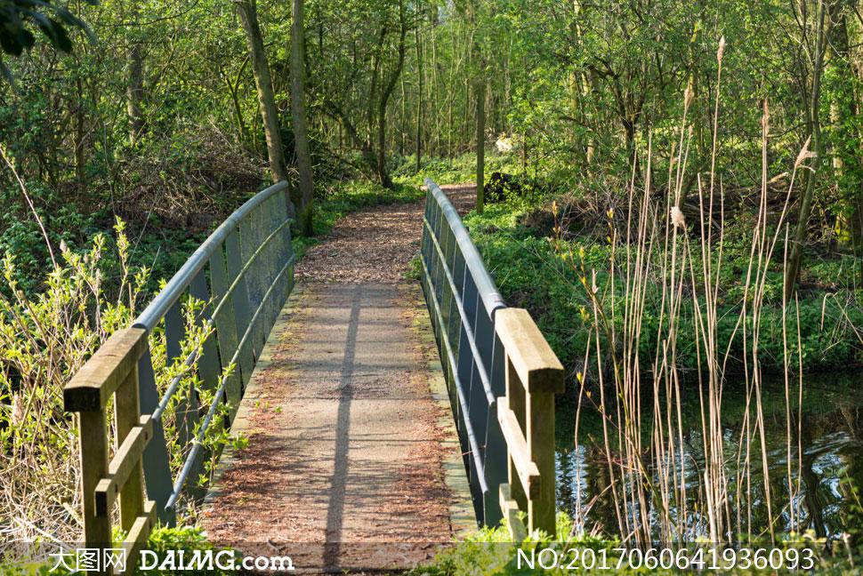 关 键 词: 高清大图图片素材摄影自然风景风光树木树林小树小桥扶手