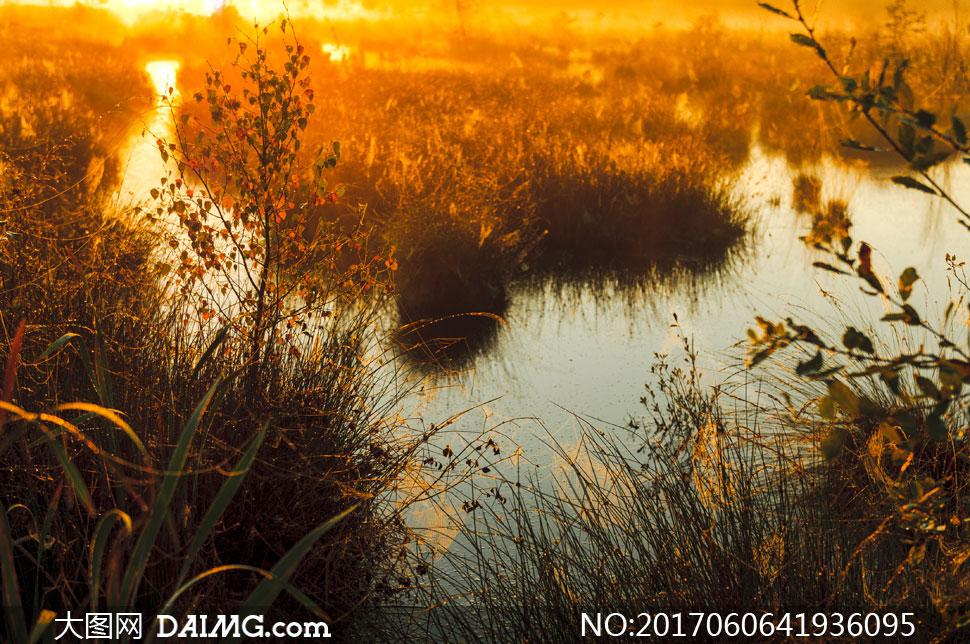 池塘边上的杂草丛风光摄影高清图片