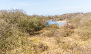 湖边的灌木丛自然风景摄影高清图片