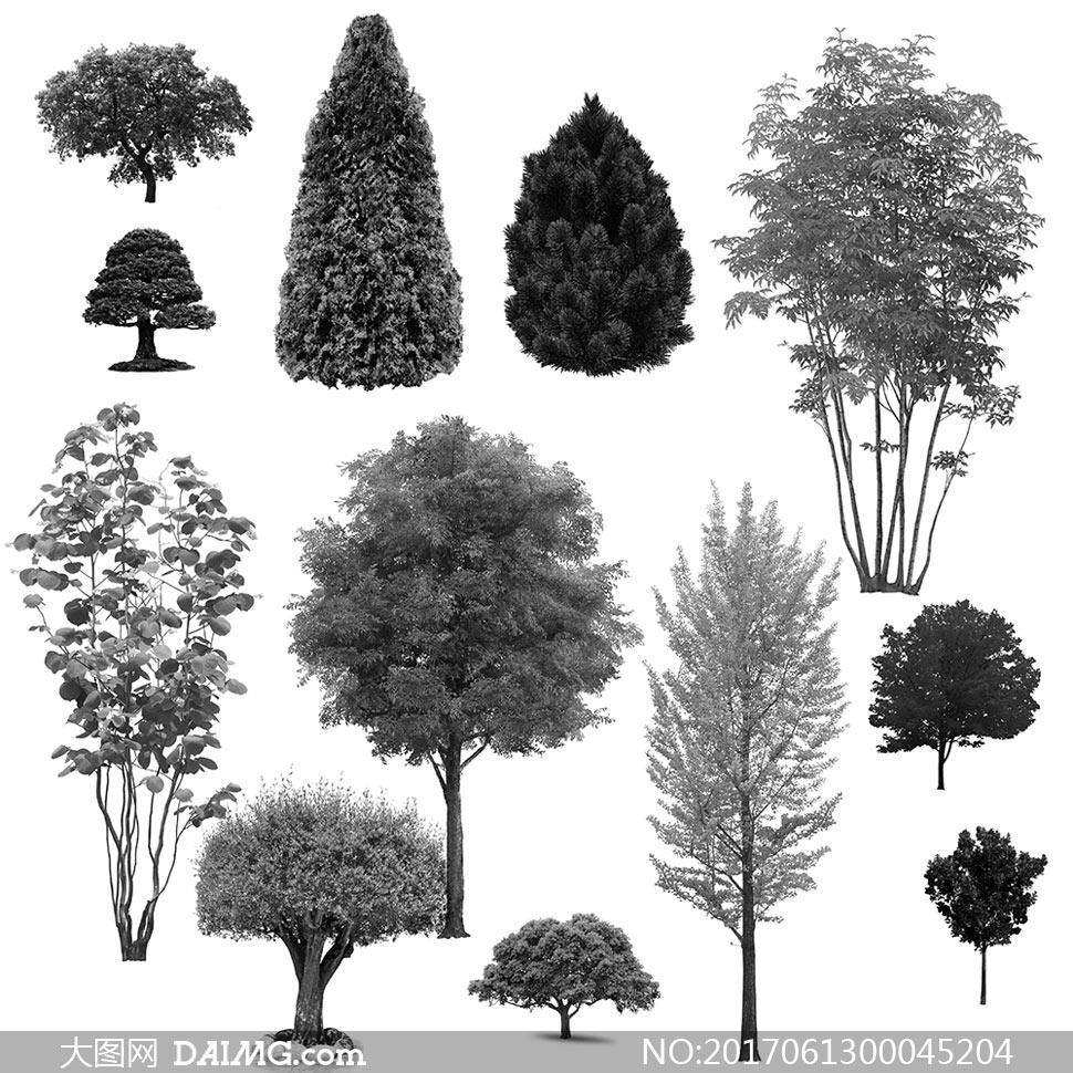 20款高清晰树木PS笔刷