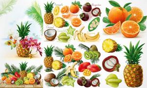 菠萝橙子与山竹等逼真水果矢量素材
