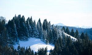 山间冰天雪地树木风光摄影高清图片