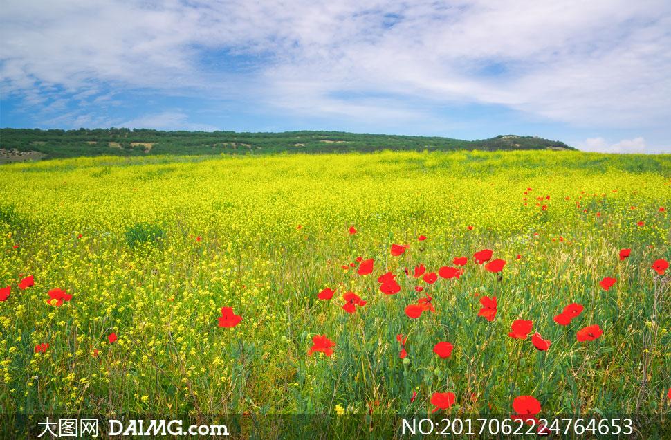 壁纸 草原 成片种植 风景 植物 种植基地 桌面 970_636