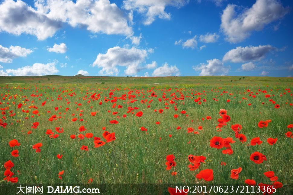 风景天空云层云彩多云蓝天云朵植被植物花朵花卉鲜花花草花丛花海花田