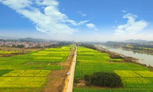 村外美丽的油菜花地摄影图片