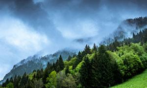 山上美丽的丛林和雾气摄影图片