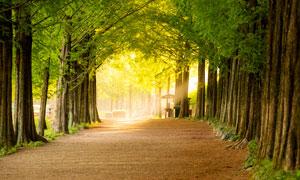 阳光透过公园里的树木美景摄影图片