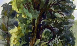 生长茂盛的大树水彩画创意高清图片