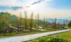 蓝天下的乡村道路美景摄影图片