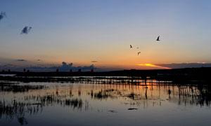 湿地公园夕阳美景摄影图片