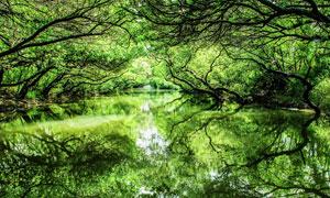 林中绿树和湖泊美景摄影图片