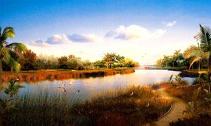 湿地公园黄昏美景摄影图片