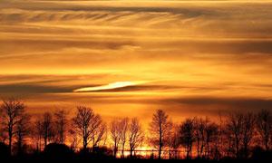 黄昏下的树林远观美景摄影图片
