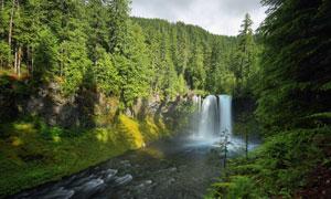 茂密山间树林中的瀑布风光高清图片