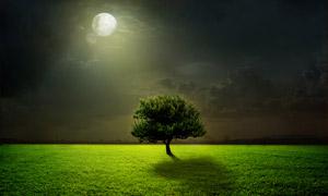 月光下的一颗大树创意摄影高清图片