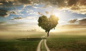天空云彩与心形树冠的大树高清图片