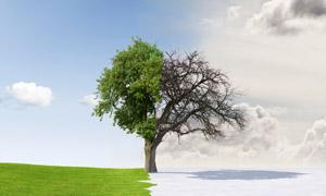 草地上的枯木逢春景象创意高清图片