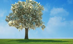 长出钞票的一棵树创意设计高清图片