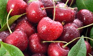 个头均匀红色樱桃特写摄影高清图片