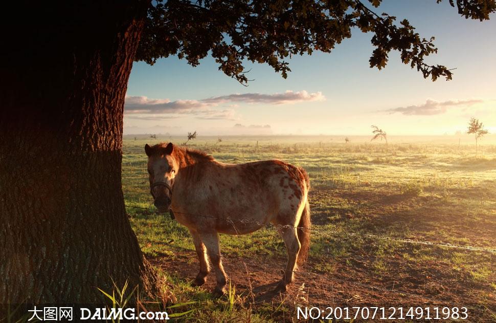 马匹自然风景风光牧场大树树下树木树枝树叶天空云彩云层多云云朵阳光