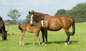 牧场草地上的马匹主题摄影高清图片