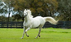 在牧场上奔跑的一匹马摄影高清图片