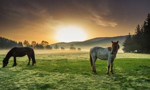 黄昏时分远山牧场风光摄影高清图片