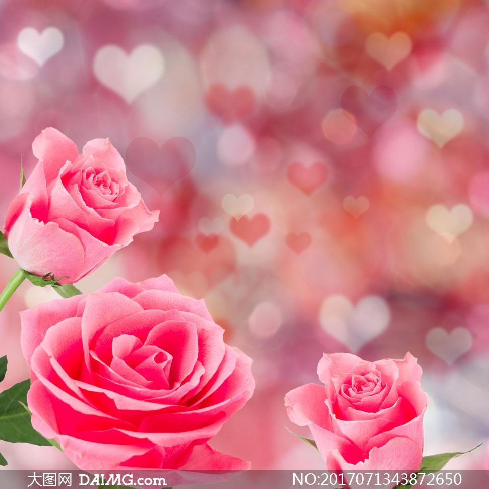 心形图案点缀的玫瑰花创意高清图片