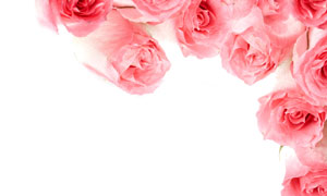 粉红色玫瑰组成的装饰边框高清图片