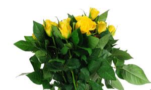 拿在手里的黄玫瑰花束摄影高清图片