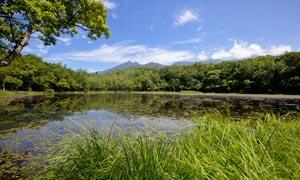 原始森林中的池塘景色摄影图片