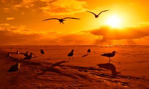 傍晚海滩海鸥美丽风光摄影图片
