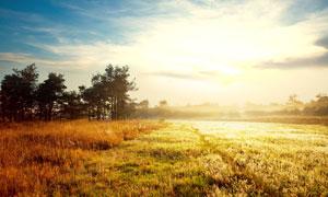 夕阳下的田园草地美景摄影图片