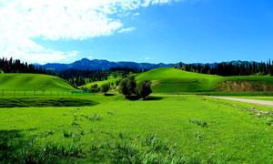 蓝天下的绿色草原美景摄影图片