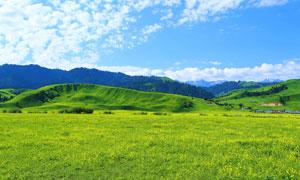 蓝天下的美丽草原高清摄影图片