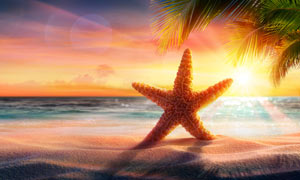 阳光下的海边立起的海星摄影图片