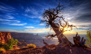 山顶上美丽的枯树摄影图片