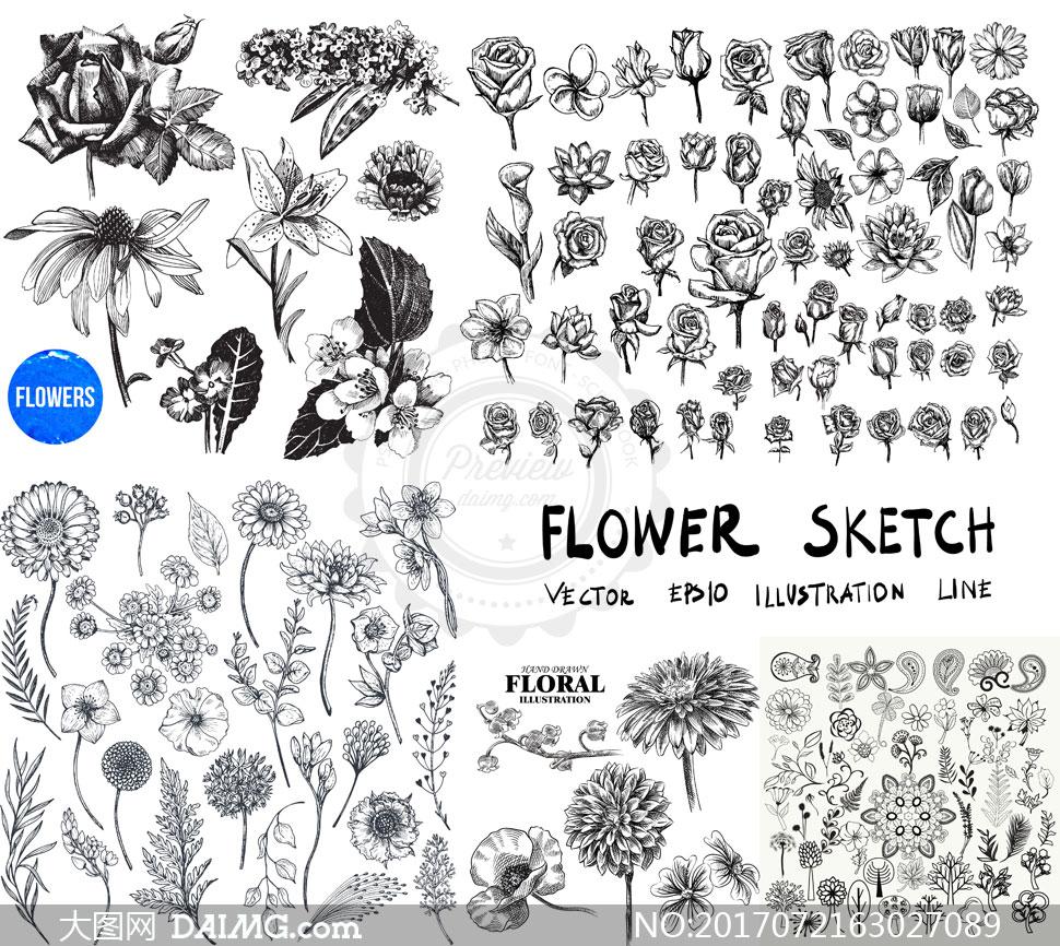 设计黑白花朵花卉鲜花手绘植物逼真质感玫瑰花叶子菊花雏菊波斯菊藤蔓