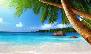 海邊椰樹和海灘美景攝影圖片