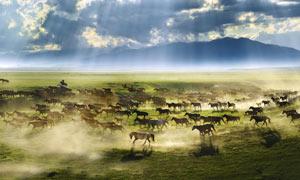阳光下草原上奔腾的马群摄影图片