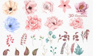 30款水彩花卉和藤叶枝叶PS笔刷