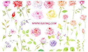 50款水彩玫瑰花和叶子PS笔刷