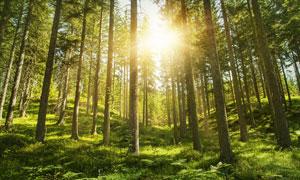 早晨美丽的森林景色摄影图片