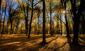 清晨公园树林美景摄影图片