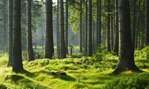 清晨森林美丽景观摄影图片