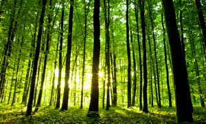早晨原始森林美景摄影图片